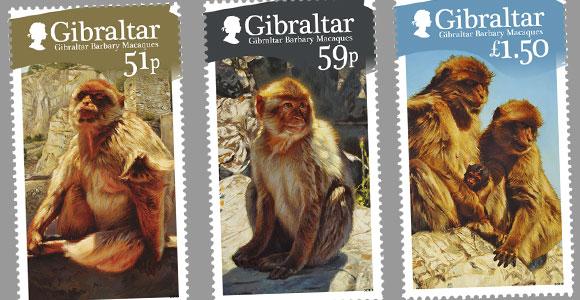 Gibraltar para monos